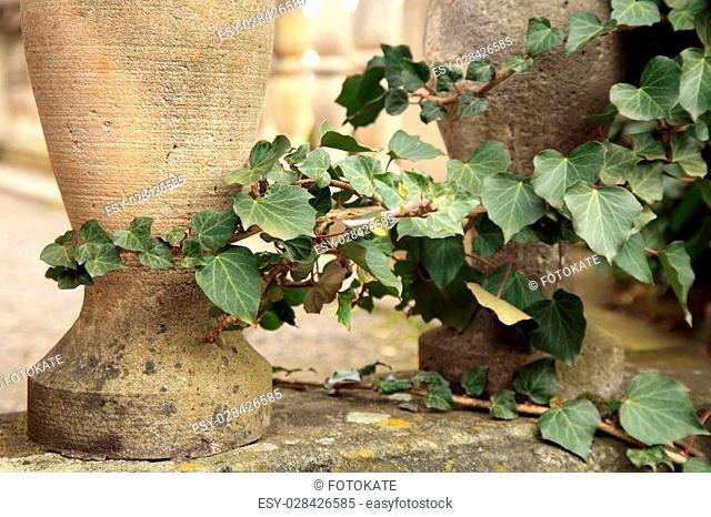Hedera ivy climbing up the pillars of the old staircase railing at the castle courtyard