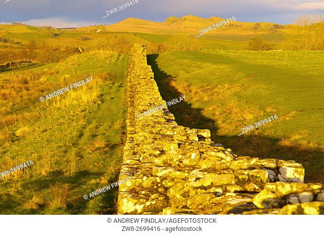 Golden evening light. Hadrian's Wall, Hadrian's Wall, World Heritage Site, Birdoswald, Cumbria, England, United Kingdom, Europe
