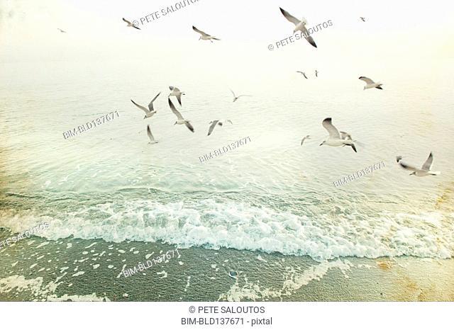 Birds flying over waves on beach