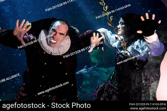 28 October 2020, Berlin: At Sea Life Berlin a diver in a witch costume and a diver in a vampire costume dive together with fish in the Atlantic basin