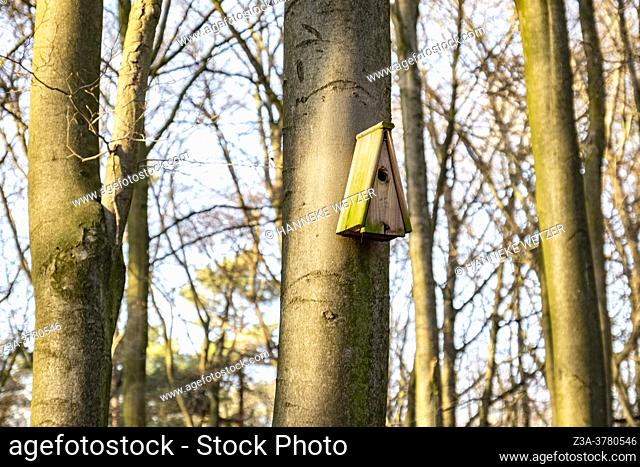 Bird house in a tree in the woods of Ede, The Netherlands, Europe