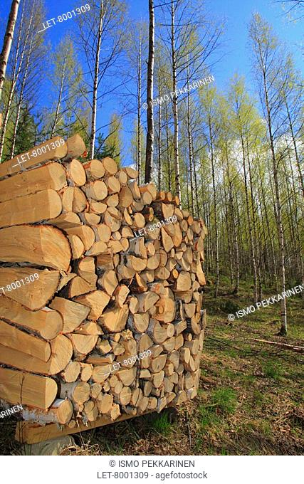 A pile of wood in a birch grove