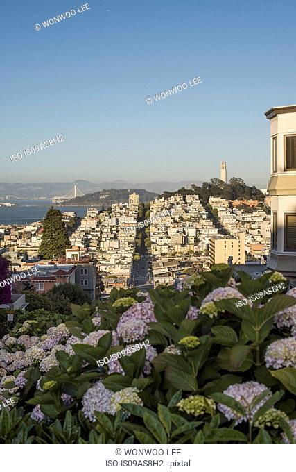 Hilltop view of San Francisco, USA