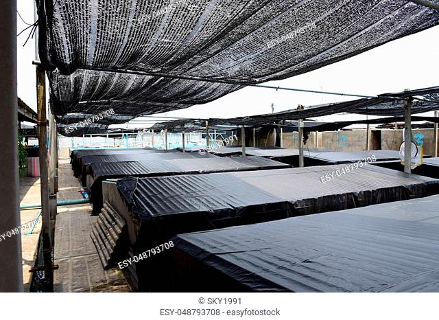 Aquatic animals. Shrimp concrete farming. A fish hatchery in Thailand