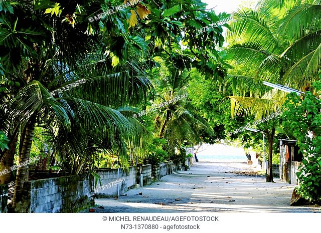Indian Ocean, Maldives, Alifu Dhaalu Atoll, Village Dhigurah