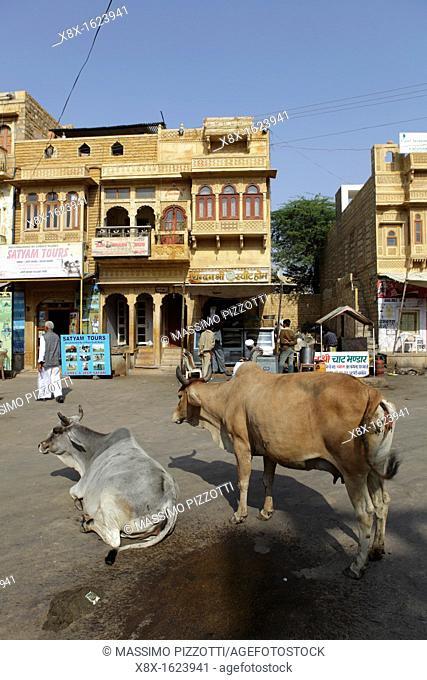 Cows in the center of Jaisalmer, India