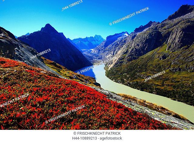 Alps, Alpine flora, Alpine panorama, view, mountains, mountain panorama, mountain lake, peak, Bern, Bernese Alps, Bernese Oberland, cliff, rock, flora