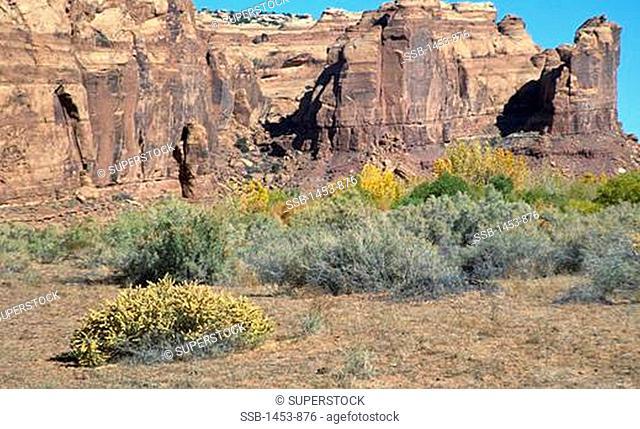 Rock formations on a landscape, Utah, USA