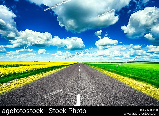 Empty Asphalt Countryside Road Through Fields With Yellow Flowering Canola Rapecolza Canola And Growing Green Wheat In Spring