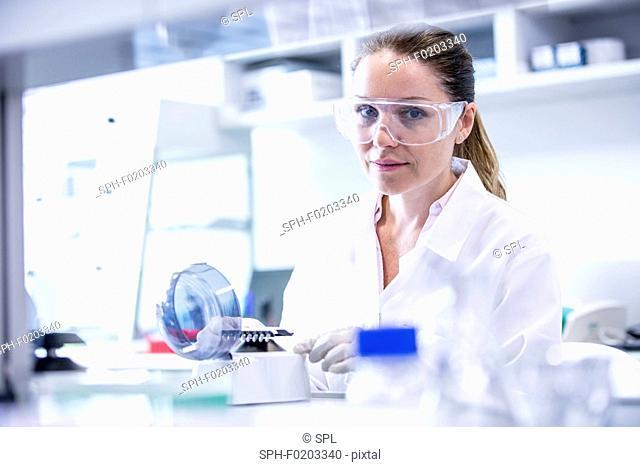 Lab assistant using mini centrifuge