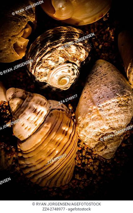 Sea shells lying in the shadows of a dark coast sunset. Marine fine artwork