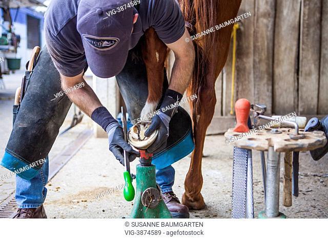GERMANY, LEVERKUSEN, Farrier cuts horse hoof with a rasp - LEVERKUSEN, NORTH RHINE-WESTPHALIA, GERMANY, 19/04/2013