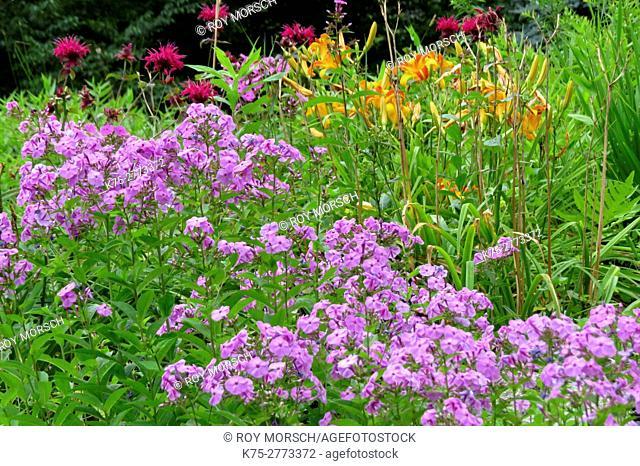 Flowerbed of Purple phlox (Polemoniaceae), orange lilies (Liliaceae), magenta bee balm (Monarda didyma) at summer