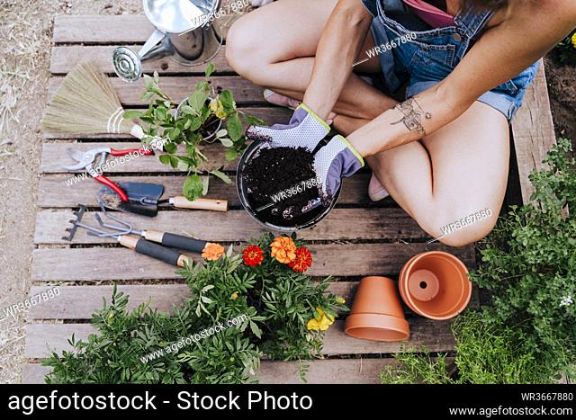 Mid adult woman holding dirt in flower pot while sitting on wood at vegetable garden