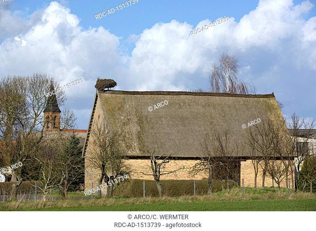 Nest of White Storck, april, Gross Quassow, Mecklenburg-Vorpommern, Germany, Ciconia ciconia