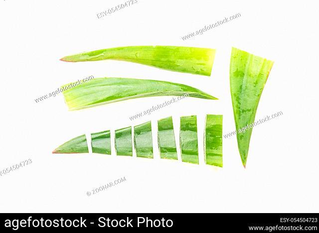 Cut aloe leaves on white background isolated