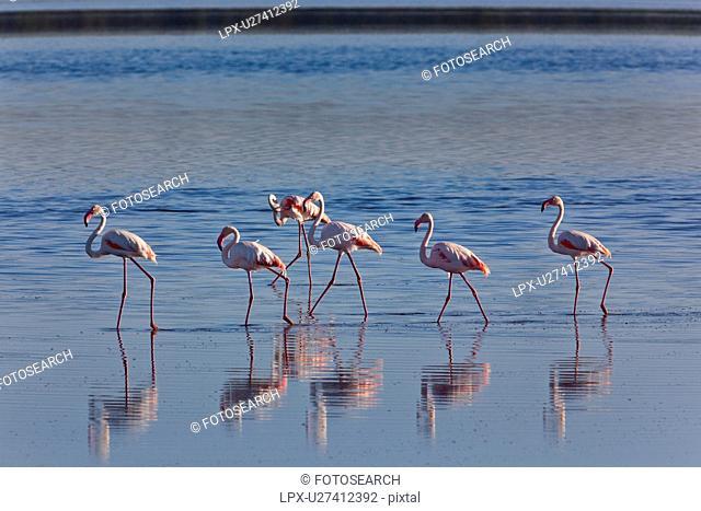 Ngorogoro Conservation Area, Central, Ndutu, National Park, Lake Ndutu, Serengeti, Africa