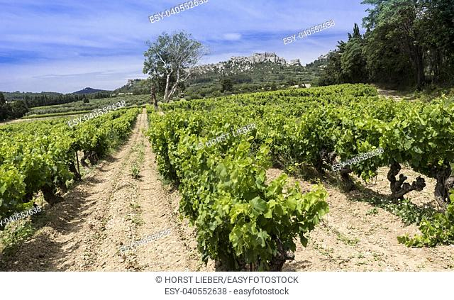 Les Baux-de-Provence historic castle with grape vines in the foreground. Bouches du Rhone, Provence, France, Europe