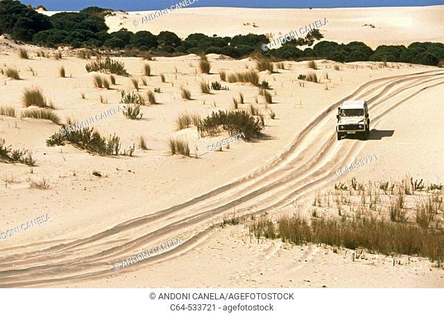 Dunes. Doñana National Park. Huelva province. Spain