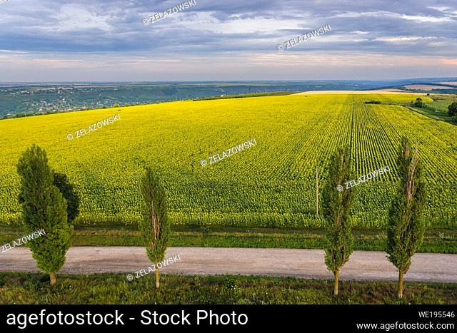 Aerial view on a road and sunflower fields in Saharna Noua village, Rezina District of Moldova