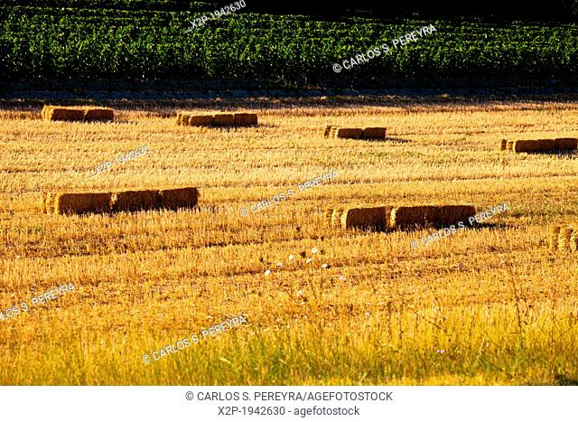 Countryside in Luberon Mountains, near of Boux, Vaucluse, Provence, France