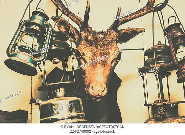 Atmospheric country interior details on the head of a mounted animal on interior wall. Creepy cabin scenes