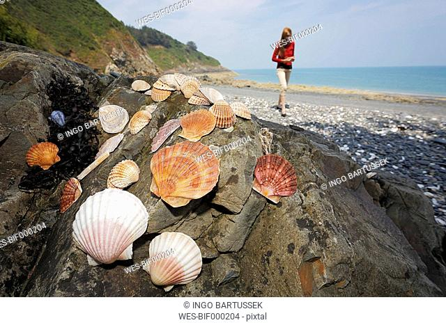 France, Bretagne, Beach of Pordic, Tourist collecting seashells