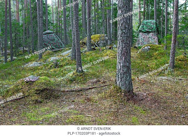 Two wildlife photographers' hides near lek of Western capercaillie (Tetrao urogallus) in spruce forest