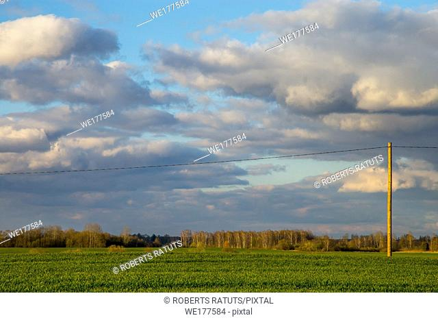 Green field with cereal and trees on the back, against a blue sky. Spring landscape with cornfield, wood and cloudy blue sky