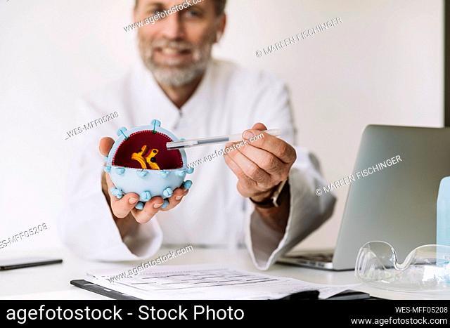 Scientist holding corona virus model at desk