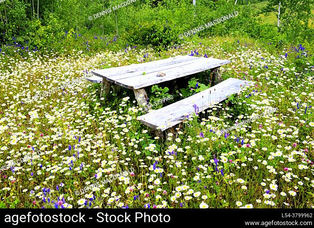 Picnic table surrounded by field of wildflowers near Dorion and Ouimet Ontario Canada