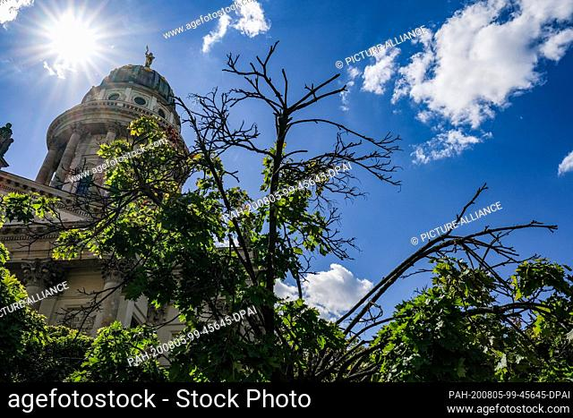 23 July 2020, Berlin: Dried branches from a ball maple tree can be seen on the Gendarmenmarkt in front of the dome of the French cathedral