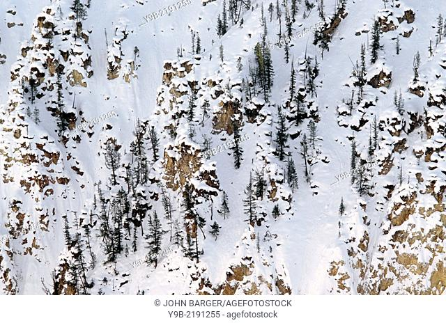 Winter snow and lodgepole pines cover steep rhyolite cliffs, Grand Canyon of the Yellowstone, from Artist Point, Yellowstone National Park, Wyoming, USA