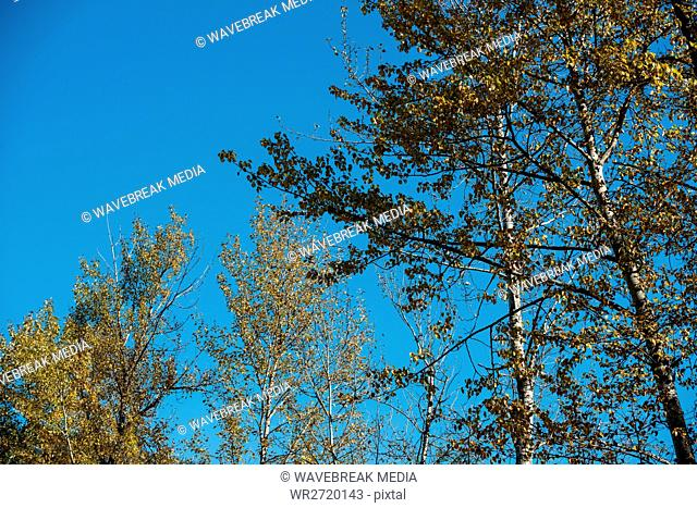 View of trees against the sky