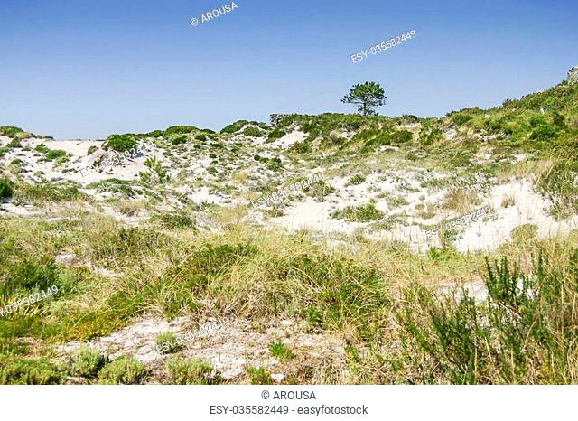 Dune vegetation with Corema album in Cies Islands natural park