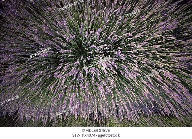 Ferrassieres, France, Europe, Holiday, Landmark, Lavender, Provence, Tourism, Travel, Vacation