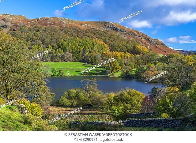 Loughrigg Tarn Elterwater, Lake District National Park, Cumbria, England, UK, Europe