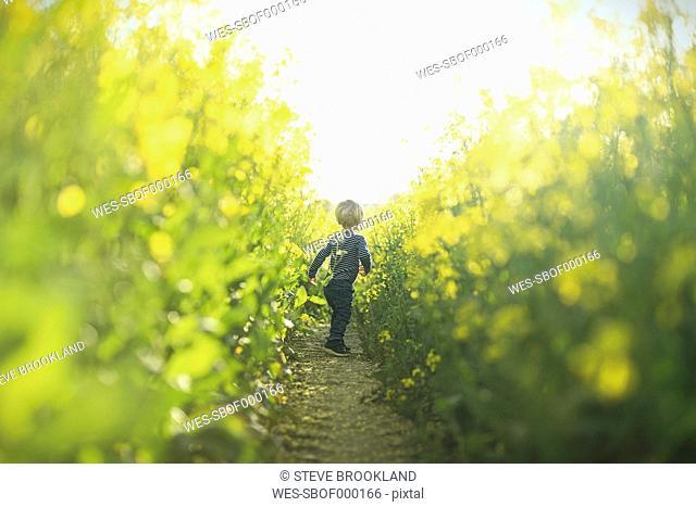 Boy in canola field