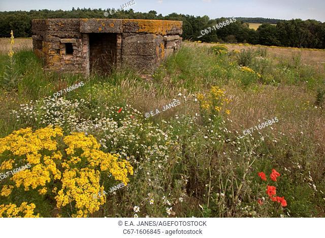 WW2 Pillbox and Rosebay Willowherb & Ragwort