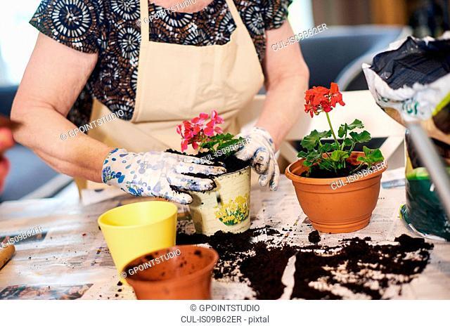 Senior adult woman potting plants on table