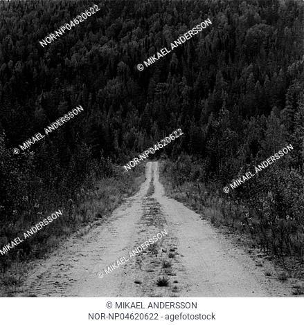 Gravelled road. Lappland. Sweden