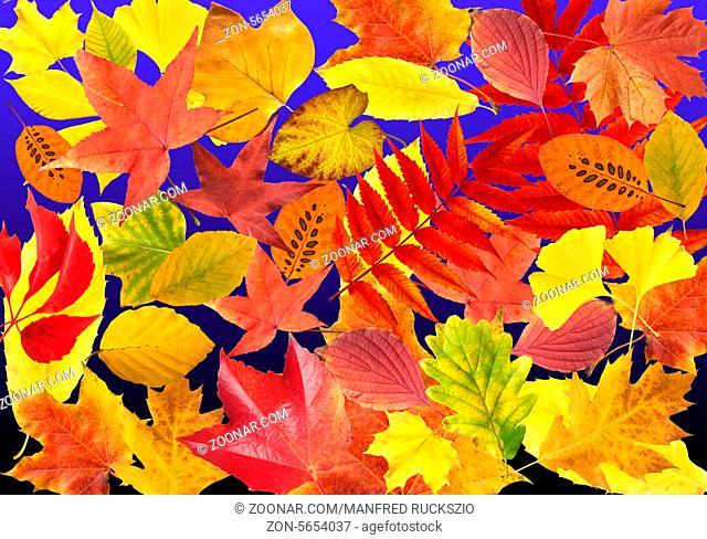 Herbstblaetter; bunt, leuchtend