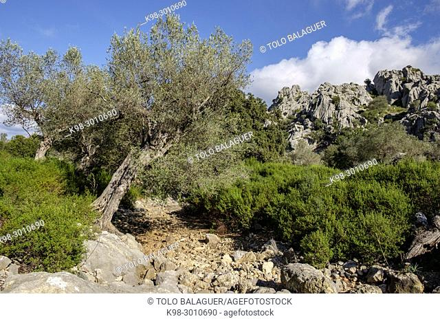 camino de ses Basses de Mortix, Mallorca, balearic islands, Spain