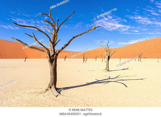 Namibia, Hardap, Namib desert, Namib-Naukluft national park, Sossusvlei dunes, Dead Vlei