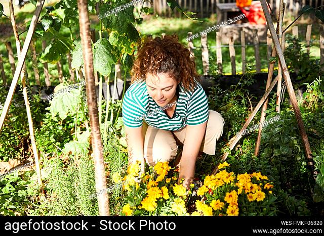 Young brunette woman gardening