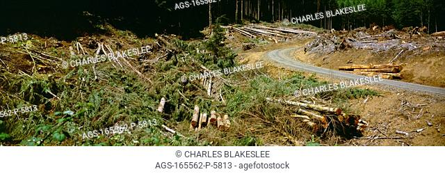 Agriculture - Destruction caused by clear cut logging in the Siuslaw National Forest, Northern Oregon Coast Range / OR - Lincoln County