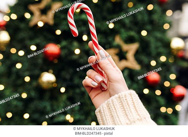 Hand of Caucasian woman holding candy cane near Christmas tree