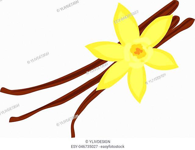 Vanilla icon. Cartoon illustration of vanilla vector icon for web