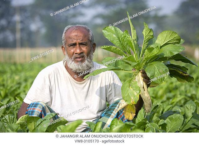 White radish farmer in the field at Jessore, Bangladesh