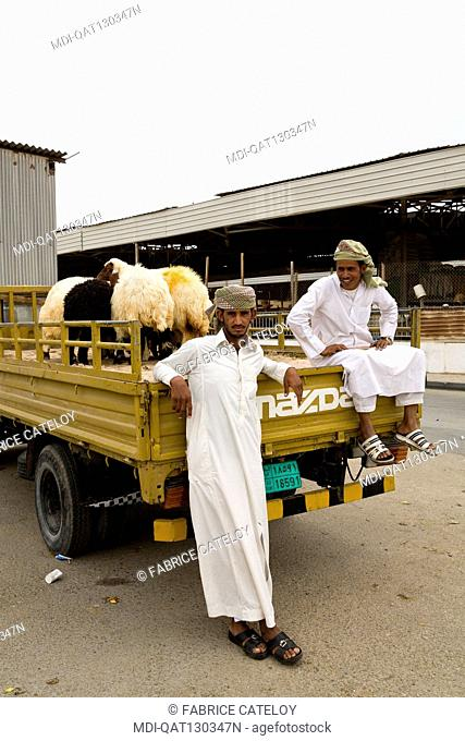 Qatar - Doha - Wholesale market - Sheep and animal market, forage, straw
